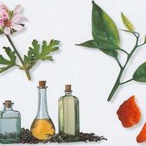 wyciągi ziołowe