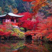 Kioto wycieczka