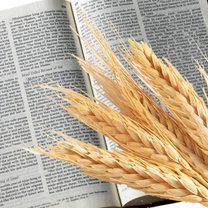 dieta biblijna