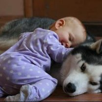 niemowlak i pies