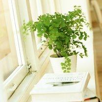 roślina doniczkowa w oknie