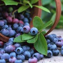 Jakie właściwości maja jagody