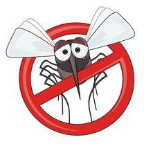 walka z owadami
