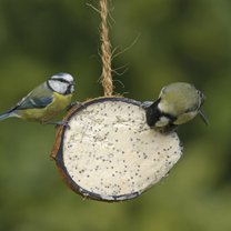 karmnik dla ptaków z kokosa