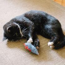 mysz dla kota