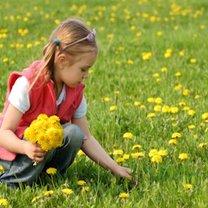 zbieranie kwiatów