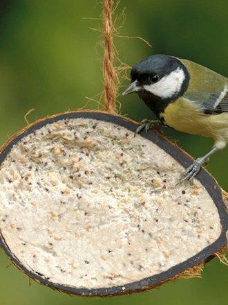 Jak Szybko Zrobić Karmnik Dla Ptaków Porada Tipypl