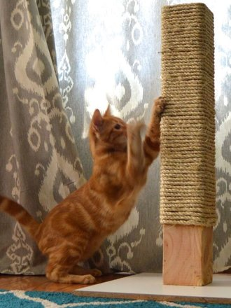 b02622450028a1 Jak można zrobić drapak dla kota? - porada Tipy.pl