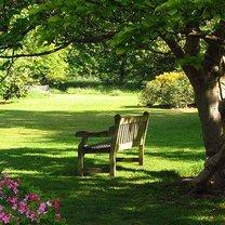 trawnik w cieniu