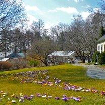 trawnik z kwiatami