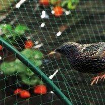 zabezpieczenie przed ptakami