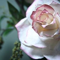 róża z filtrów do kawy