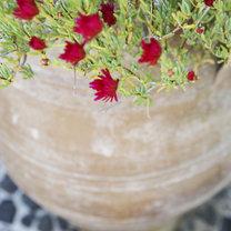 Jak zajmować się roślinami by nie uschły