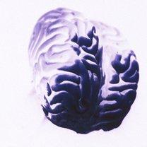 15 rzeczy które pomogą poprawić pracę twojego mózgu