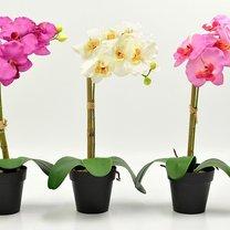 8 roślin które pilnują by dobrze ci się spało