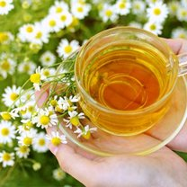 Herbatka rumiankowa