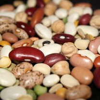 Fasola, nasiona i orzechy