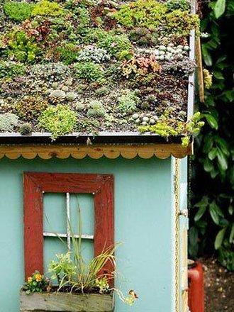 Jak Zrobić Zielony Dach Porada Tipypl