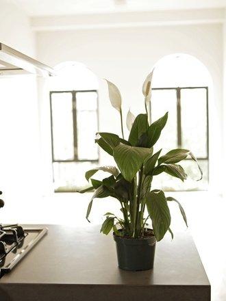 6 oznak, że za mocno podlewasz kwiaty