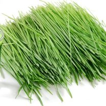 Lecznicze właściwości trawy pszenicznej