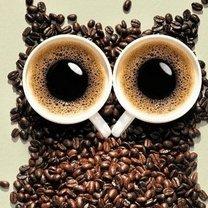 Spada poziom kofeiny