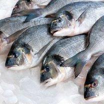 Tłuste ryby właściwości