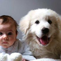 Jaki pies dla rodziny