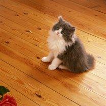 Koci mocz czyszczenie