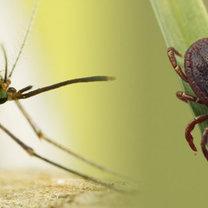 Domowy sposób na komary i kleszcze