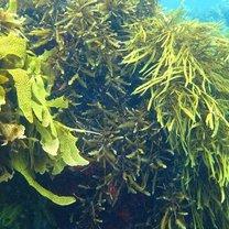 Morskie wodorosty właściwości odżywcze