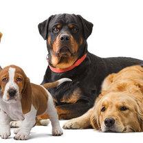 Jakie psy żyją najdłużej