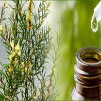 Olejek z drzewa herbacianego właściwości insektobójcze