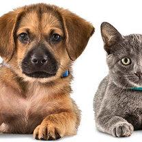 Zwierzęta domowe choroby