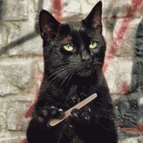 Sposób na drapiące koty