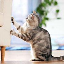 Co zrobić żeby koty nie drapały