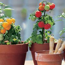 Jakie rośliny wyhodujesz z resztek?