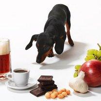 Jedzenie trujące dla zwierząt