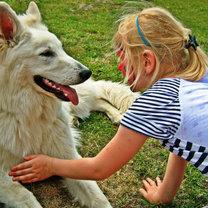 Kontakt wzrokowy z psem