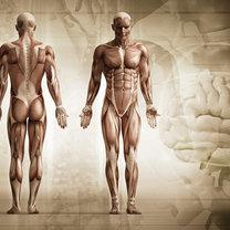 Ludzkie ciało ciekawostki