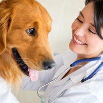 Nowotwór u psa objawy