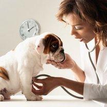 Jak rozpoznać nowotwór u psa