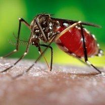 Jak radzić sobie z ukąszeniami komarów