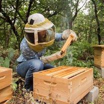 wspieranie pszczelarzy