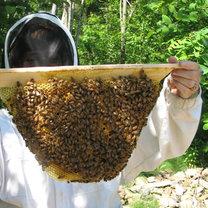 wspieranie pszczół