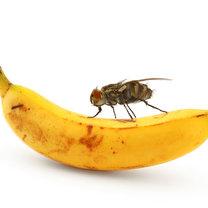mucha a żywność