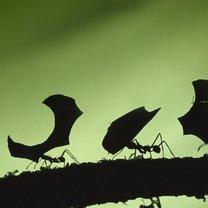 mrówki jak się pozbyć