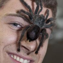 Jak pozbyć się pająków z domu? - Porady w INTERIA.PL