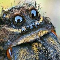 Zdjęcia z porady: 15 niesamowitych faktów o pająkach - tipy.pl