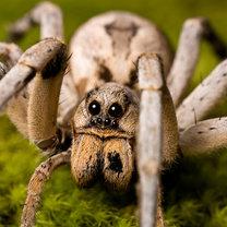 pająki