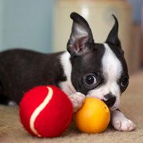 zabawki dla zwierząt